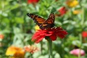 Butterfly Flower Crop